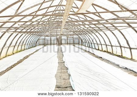 Plants covered with plastic film in a greenhouse.