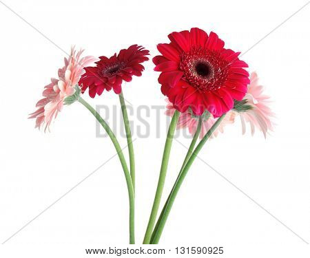 Bouquet of gerbers isolated on white