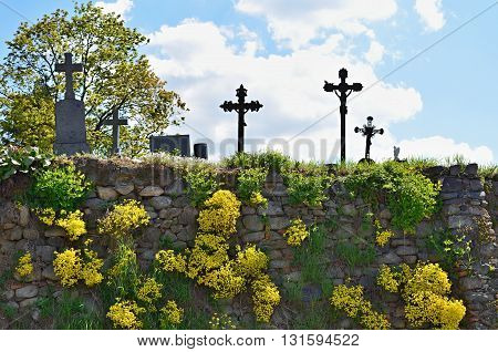 Wall at the cemetery with tiny yellow flowers and crosses in the background.
