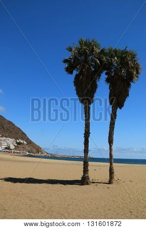 Palmtree on The beach of san jose in The national park of Cabo de Gata , Almeria , Spain