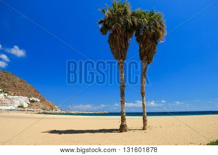 Palm tree on The Beach of san José , park national of Cabo de Gata , Almeria , Spain