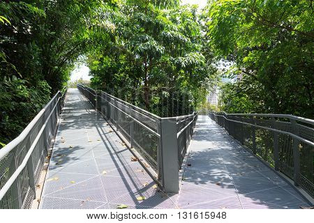Forest Walk Of Telok Blangah Hill Park Rainforest And Skyscrapers, Singapore
