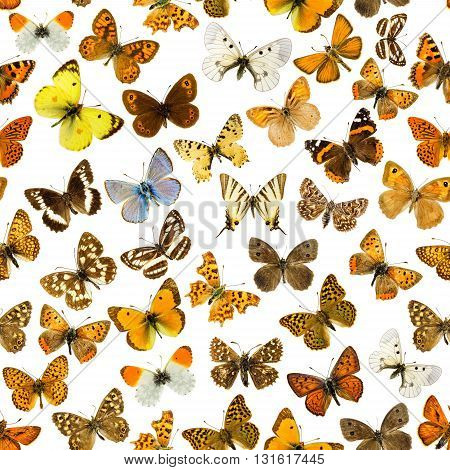 Many different butterflies on a white background