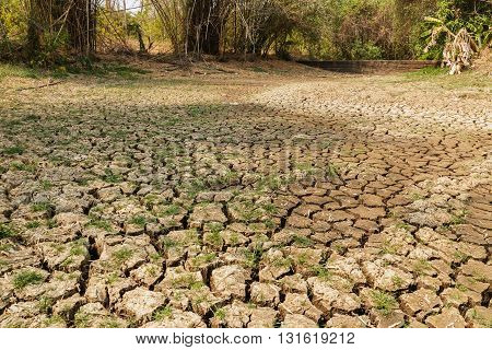 Cracks during the dry season of the soil in wilderness