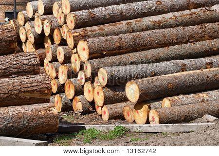 Pine and fur-tree logs
