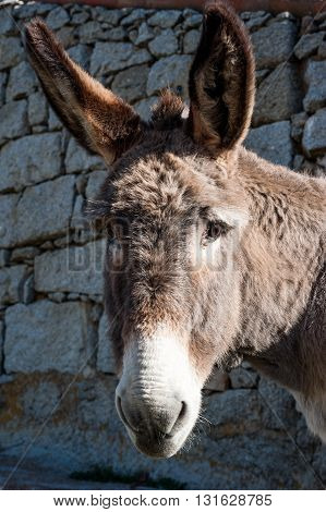 Donkey vertical portrait, rural village, Avila Spain