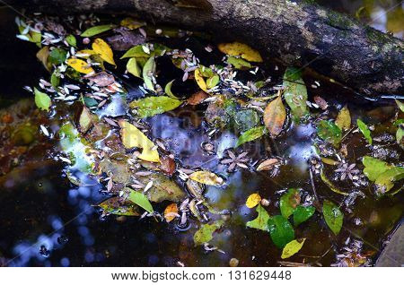 Colourful leaves and flowers floating on water