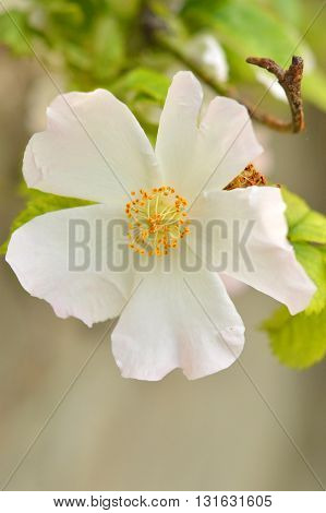 the Spring flower on a tree in the forest