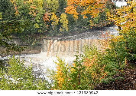 Autumns vivid foliage frames Upper Tahquamenon Falls as it rages along the Tahquamenon River after heavy autumn rains. Some people refer to this as the Rootbeer falls because of the rusty brown color. This color results from tannins that leach through the