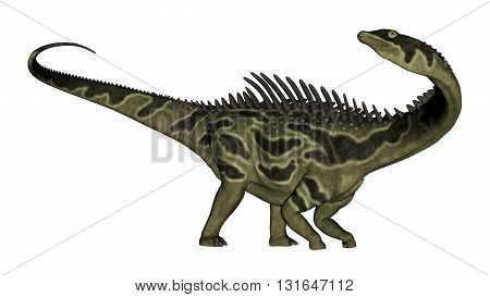 Agustinia dinosaur turning head aside isolated in white background - 3D render
