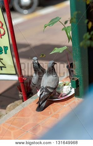 pigeons on the streets of Pattaya Thailand. from the trough peck rice