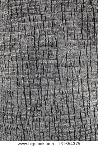 Close up of the bark of a palm tree background