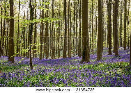 Springtime Blue Beach Forest (2)