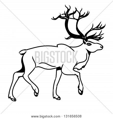Graphic image of deer. Black outline of a reindeer on a white background. Abstract illustration vector