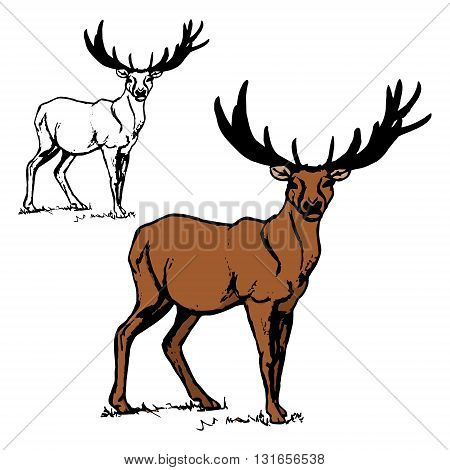 Two images of deer. A simple outline of a deer with big antlers colorful deer pattern on white background. The set of graphical illustrations vector