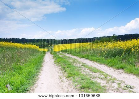 Country road through a field of rapeseed and blue sky landscape