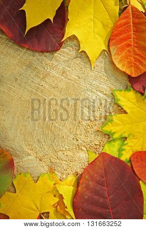 Autumn leaves on the wooden background