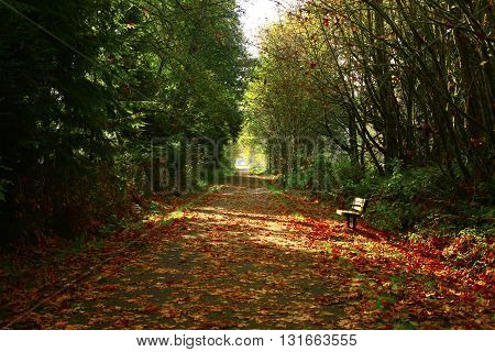 a picture of an exterior Pacific Northwest forest path in fall