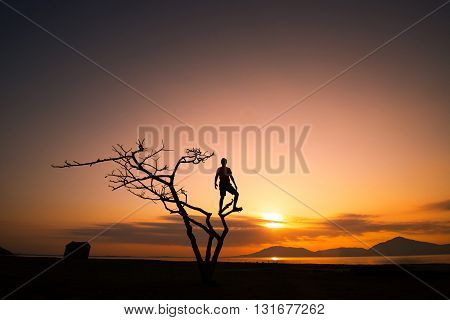 Young man in the tree in sunrise