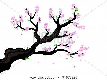 Cherry Blossom branch isolated. Editable Clip Art