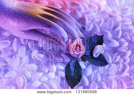 BEAUTIFUL ABSTRACT ROMANTIC TOP VIEW IMAGE OF A HAND HOLDING A ROSE , ON A SEA SHELL BACKGROUND , BEAUTIFUL PASTEL COLORS