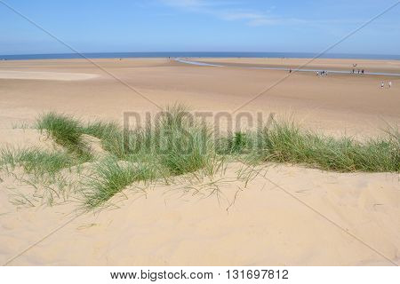 European marram grass on a sandy beach near Wells-next-the-sea in Norfolk England
