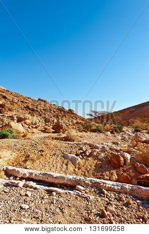Stones of Grand Crater in Negev Desert