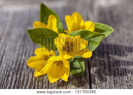 Bright, fresh and yellow flowers on a wooden board. Texture and pattern in the board.