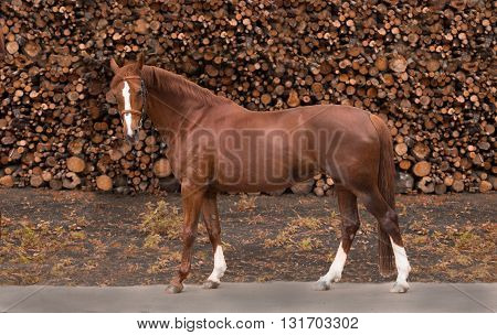 red horse stay on the firewood background