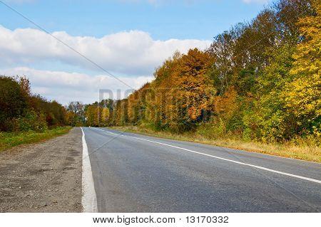 Suburban Autumn Fall Road At Sunny Day