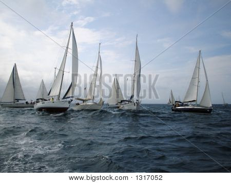 Sailboats In Regatta