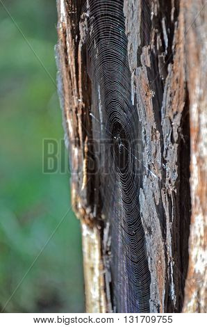 Sunlight reflecting off the concentric rings of a Spider web on a tree trunk