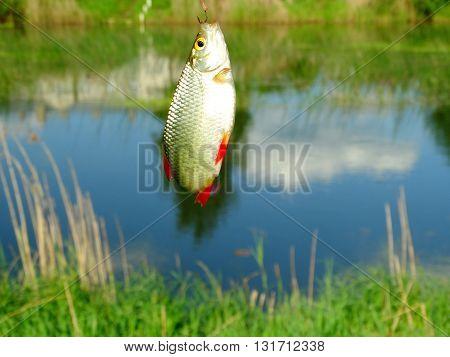 Fishing on the lake fish hooks bait worm catch