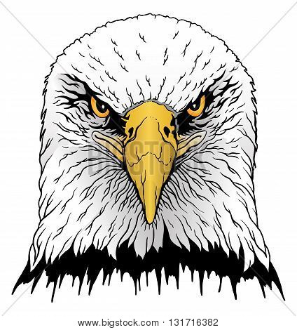 Eagle Head is an illustration of a hand drawn bald eagles head in color.