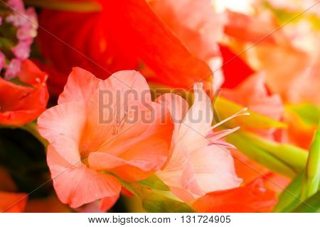 Beautiful flowers  for valentines and wedding scene