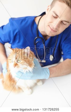 Experienced veterinarian is checking animal state. He is touching a cat and smiling. The man is sitting at desk in his office