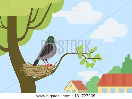 Pigeon dove flat design cartoon vector wild animals birds