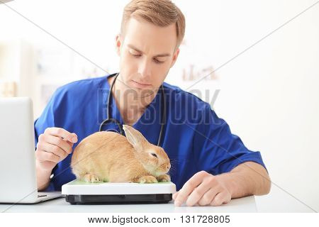 Skillful male vet is checking weight of rabbit on the scales. He is sitting at desk and looking at equipment seriously