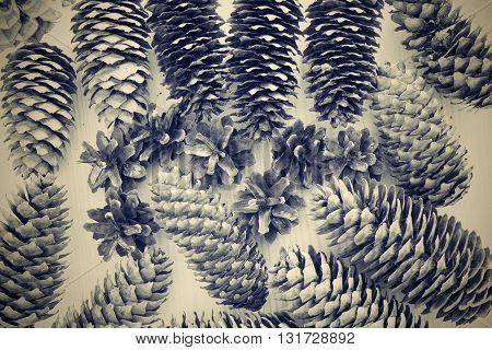 various old cones from a coniferous tree closeup for an abstract natural background of tone sepia in retro style