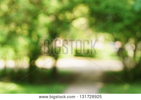 blurred background of green park in summer, very high resolution