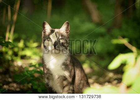 young female kitten in the shade of bushes, shallow focus