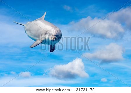 Dolphin In The Cloudy Sky Fantasy Background