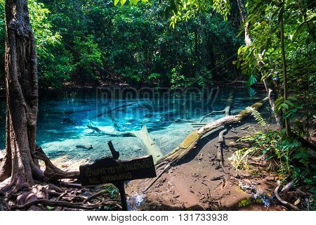 Emerald Blue Pool At Krabi Thailand