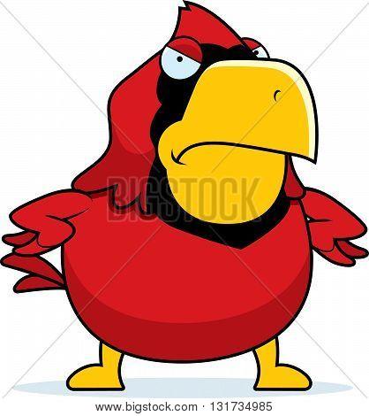 Angry Cartoon Cardinal