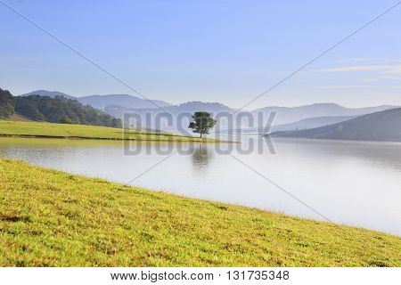 Alone tree in Dankia lake, Dalat, Vietnam