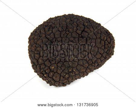 Perigord  summer truffle (Tuber aestivum) known as the black diamond