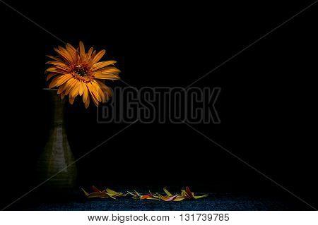 Still life vase with flowers Black backgroundflower backgroundbeautiful flowerflowers Black background