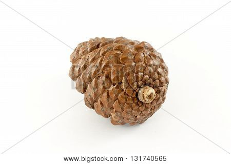Beautiful cedar cone on a white background.