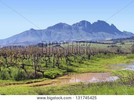 Grape Farm With Pools Of Rain Water In Fore Ground And Mountains In Back Ground, Stellenbosch, Cape Town  South Africa 14