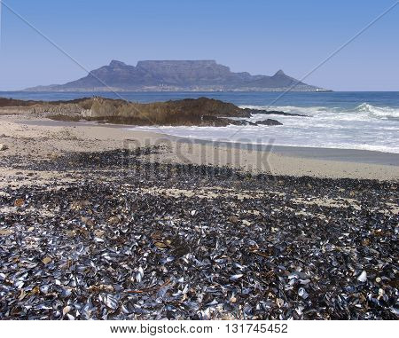 View Of Table Mountain With Sea Shells In Fore Ground, Blouberg Strand Cape Town South Africa 27